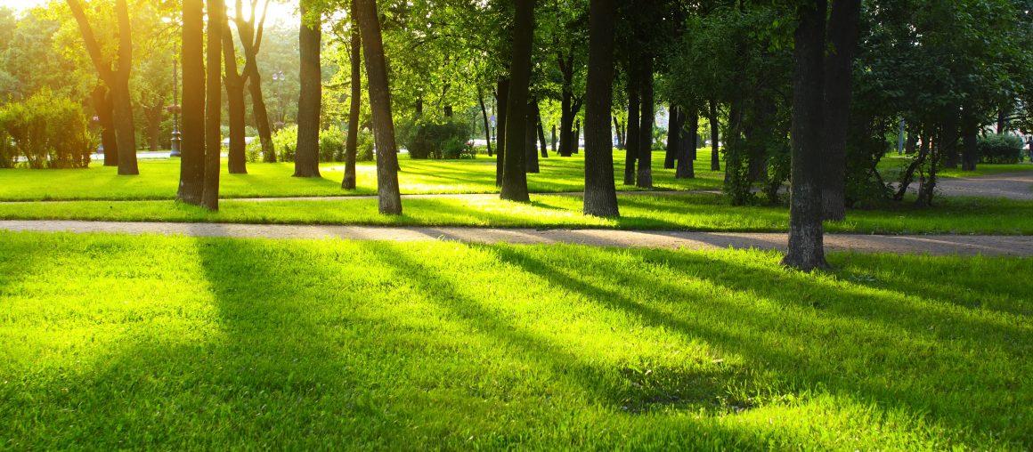 """""""Paličkovanie"""" v parku"""